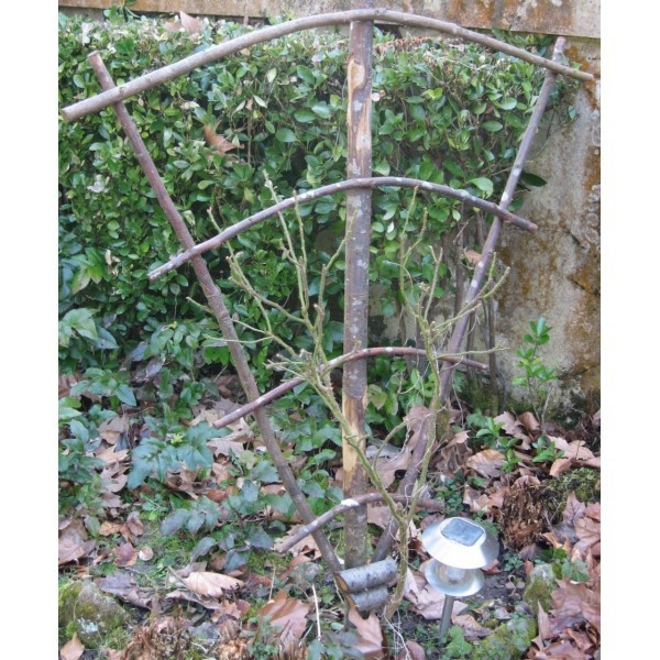 Eventail pour plante grimpante - Support plante grimpante ...